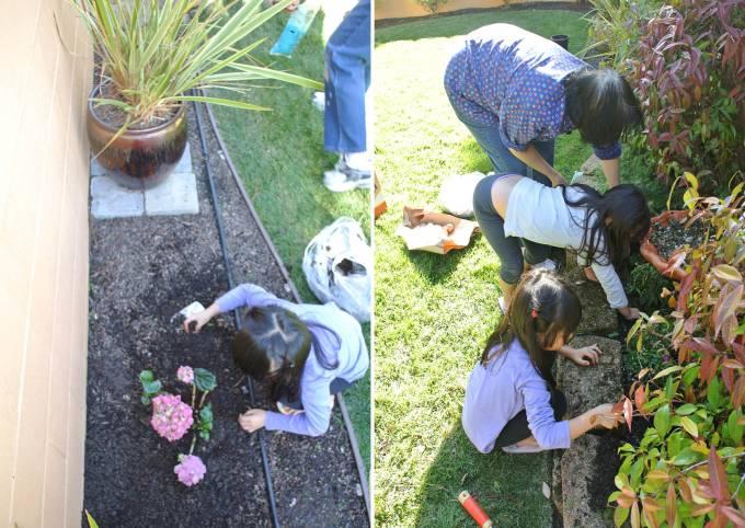 Planting their favorite pink hydrangeas