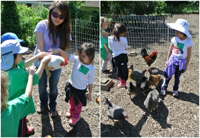 Petting the chickens