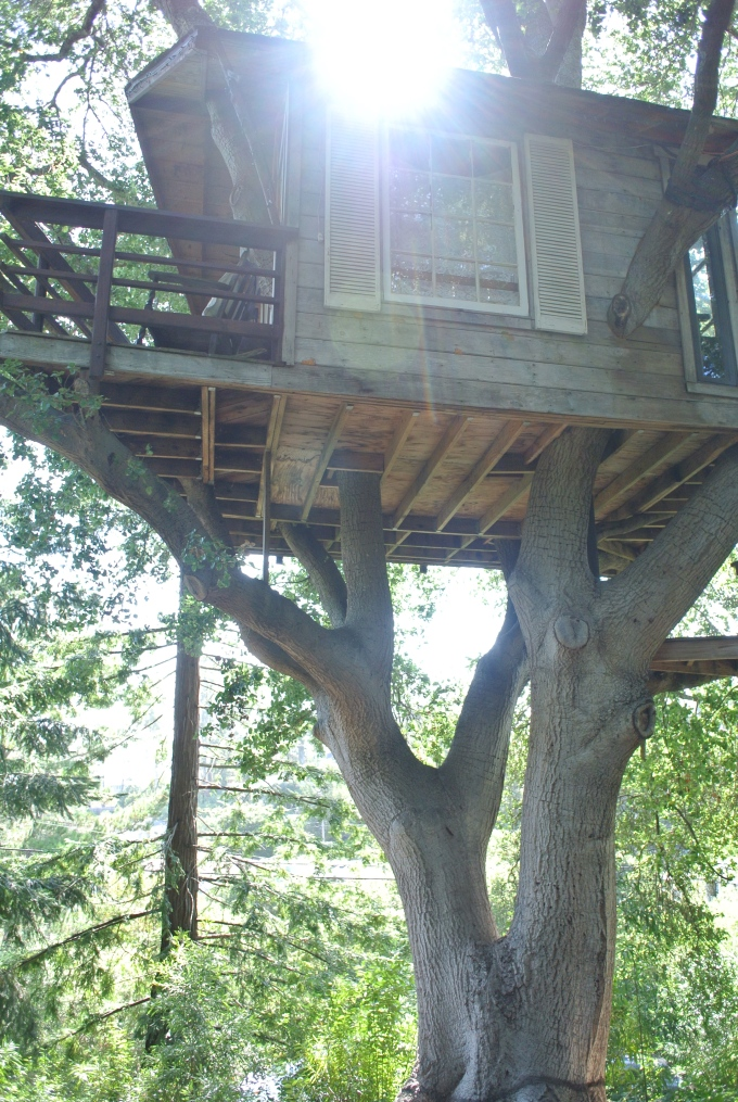 First view of the treehouse!