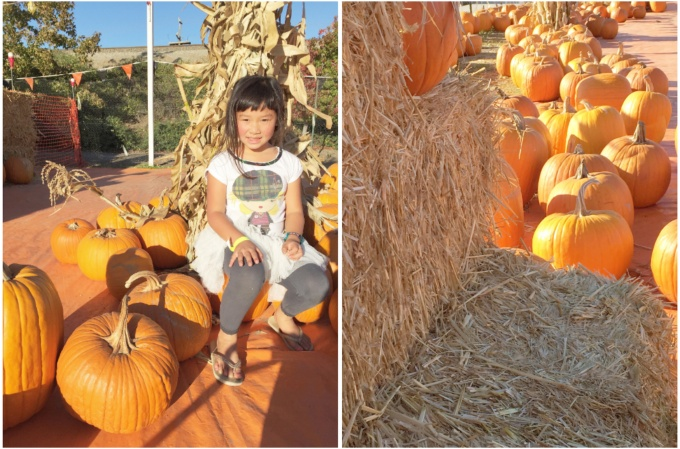 pumpkinpatch_sancarlos1