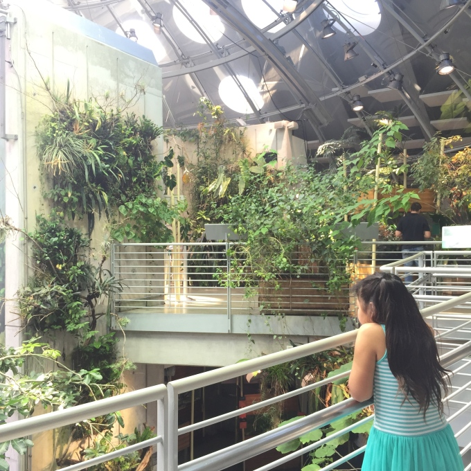 Looking for butterflies in the rainforest at the Cal Academy of Science